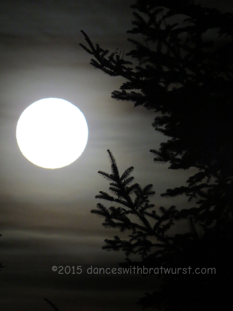 Full moon as seen from our driveway, 6 p.m., December 25