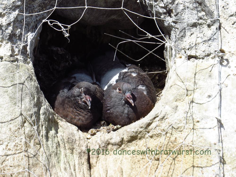 Birds living in the Obertor.