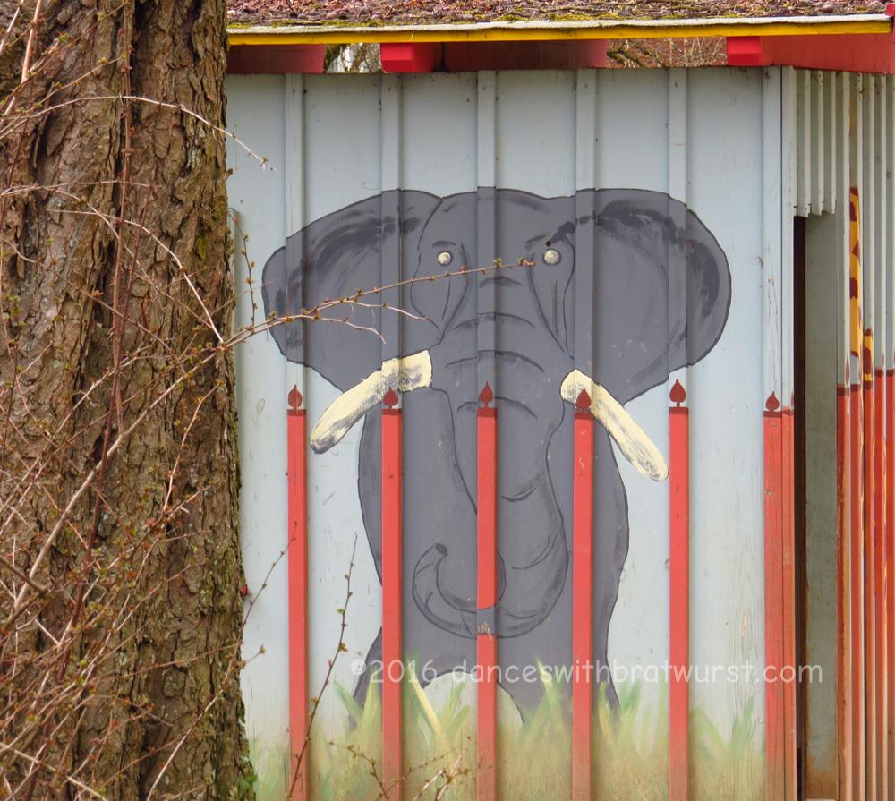 Random elephant.