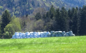 Salzburger Land had a good giant marshmallow harvest this year.
