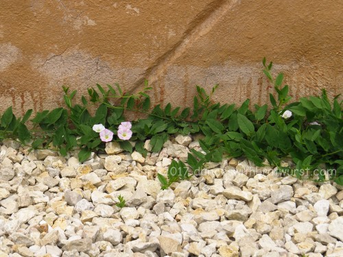 Flowers along the wall.
